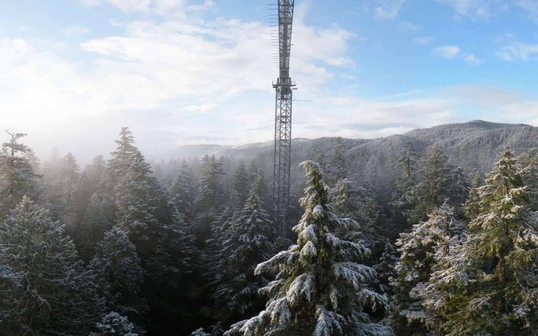 crane in winter
